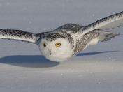 Snowy Glide