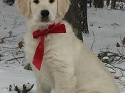 Brody from Dunbarton