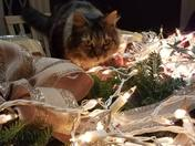 Kitties in the Christmas decorations