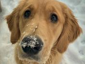 Puppy first snow
