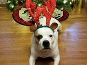 Jack my Cute Little Reindeer