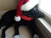 Mollies First Christmas