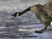 Icy landing