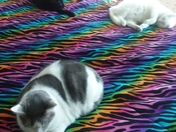 Our 3 cats sleeping on our bed in the cold days of winter.