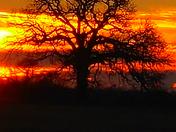 12-15-17  Oklahoma Serengeti