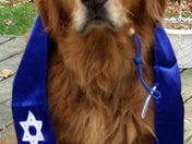 Our Zimmy celebrating Chanukah