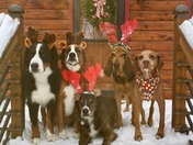 Doggie Christmas Card picture