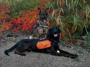 Sandoval County Rescue Team has gone to the dogs