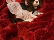 My Arabella Merry Christmas
