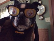"Mikey Ray is ready and barking, ""Here we go Steelers""."