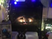 Merry Christmas from Jillie & Razar Banks