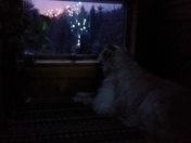Lucy watching Shawnee Peak lights