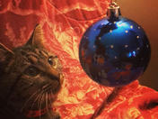 She is mesmerized by the Christmas ornaments.