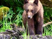 A Curious Cub