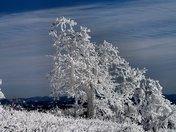 Winter Magic, On White Top mountain