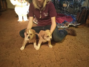 Christmas with my puppies