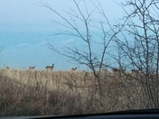 Deer near my house in Glenwood enjoying the weather!