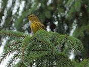 in joying the cedar