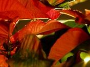 A Christmas Motif,