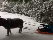 Driving Donkey in snow