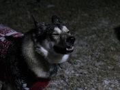 Thor loves snow!