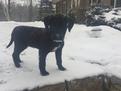 Olive's first snow storm she's our new pup a Rescue Alabama