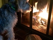 Puppy's first fire