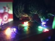 Christmas Pet