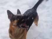 Snowy creatures of Sanborton