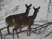 I double deer ya!