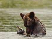 Bear Lunch