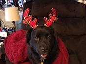 Cutest little reindeer!