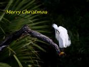 A Florida Christmas