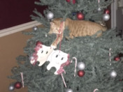 The Perfect Christmas Ornament