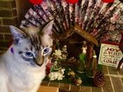 Simba's first Christmas