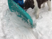 Jack in the snow!