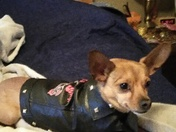"""This is """"Chico"""" our family pet he is 7 years old today 12/29"""