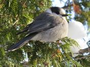 A friendly bird 365 days a year