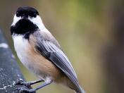 Bird waiting