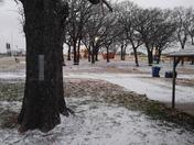 Maci's first snow!❤🐶❄🐾