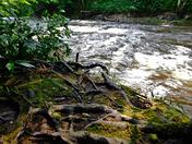 Deep Creek, Great Smoky Mountains National Park, NC