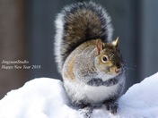 Happy Squirrel 2018