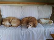 Triple Comfort.