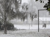 Snow day in the lowcountry.