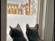 Jan 4 Snowstorm.