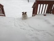 Cavalier in the snow