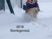 Sookie in Bombogenisis 2018