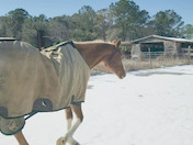 This is my rescue horse Copper