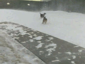 Puppies playing in the blizzard