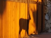 This deer is a shadow of her former self